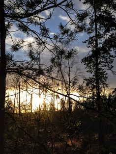 naturensdronning: Dagens utvalgte - 29. des 2015