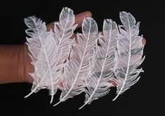 Stunning Paper Cut Art from One Sheet of Paper  Artist Parth Kothekar about whom we previously wrote is behind paper art creations he made by cutting only one sheet of paper. Artwork that can be compare to lace representing butterflies a bicycle feather or women silhouettes. A very poetic precise work.         #xemtvhay
