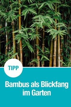 Bambus im Garten Bamboo is a great eye-catcher in the garden and serves as a screen. Fresh Vegetables, Fresh Herbs, Bedroom Murals, Bedroom Loft, Sea Salt And Pepper, Energy Snacks, Engagement Ring Cuts, Colorful Drawings, Healthy Options