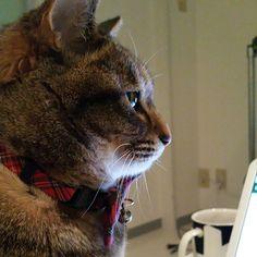 「うめぴんの横顔。 From the side  #ねこ #猫 #猫写真 #ネコ #しましま軍団 #キジトラ #キジネコ #きじねこ #きじとら #cat #catstagram #neko #instacat #tabby #kitty #meow #고양이」