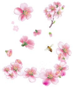 Spring Pink Trees Flowers PNG Clipart