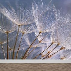 Fotobehang Dandelion grijs blauw. Geeft jouw woonruimte een hele warme sfeer. Op maat voor je gemaakt. Zelfklevend en vliesbehang. Bestellen? YouPri.nl