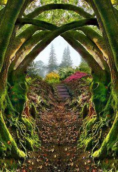 Mossy Forest, Bretagna, Francia
