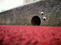 12 Coolest Examples of Eyebombing  by Gracie Murano   Eyebombing is the act of putting googly eyes on inanimate things in public spaces - bring sunshine to people passing by.