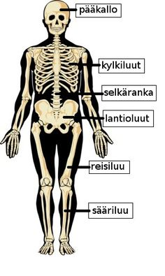 Skeletal words in Finnish Learn Finnish, Finnish Words, Finnish Language, Teaching Aids, Science And Nature, Helsinki, Human Body, Education, Literatura