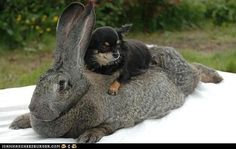 Daily Squee: Giddyup, NobleSteed!