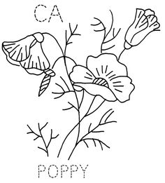 California Poppy by turkeyfeathers, via Flickr