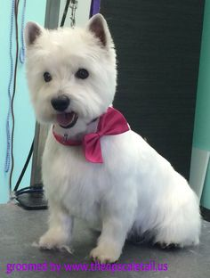 groomed by The UpScale Tail, Pet Grooming Salon, Naperville