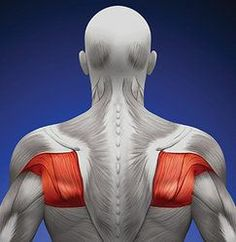 The Forgetten Rotator Cuff Muscle, Part 4 Spa Therapy, Hand Therapy, Massage Therapy, Physical Therapy, Shoulder Rehab, Shoulder Surgery, Infraspinatus Muscle, Rotator Cuff Exercises, Psoas Release