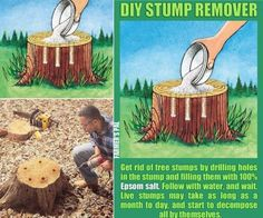 Tree Stump Remover using Epsom Salt and Drilling Holes.