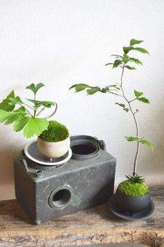 イチョウ・ブナノキ moss green ikkei ×Kitowa(樹と環)