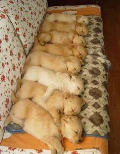 I bet placing them one by one was fun. How did the puppies just stay this way? Sleeping drugs.....