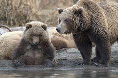 Страница Виртуальных Путешественников - Игорь Шпиленок - защитник дикой природы