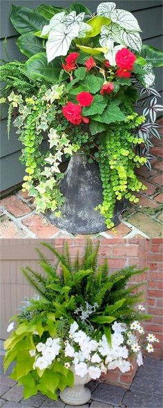 Showy, colorful and easy care shade plants and container gardens with vibrant foliage and flowers. 30 designer plant lists to create gorgeous gardens with shade loving plants ! – A Piece Of Rainbow Showy, colorful and easy care Shade Plants Container, Container Flowers, Container Gardening, Succulent Containers, Plants For Containers, Diy Garden, Garden Planters, Shade Garden, Fall Planters