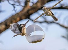 Cheap handmade bird feeder designs offer creative wood and plastic recycling ideas which turn plastic bottles, containers and reclaimed wood pieces into functional yard decorations