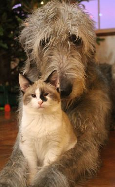 Babe the Irish Wolfhound, and Bernadette the kitten.