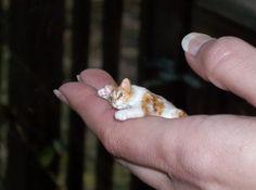 Realistic Handmade Dollhouse Miniature Pet Cat Sculpture OOAK 1:12 TMD