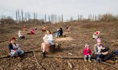 Polish law change unleashes 'massacre' of trees | New law allows private landowners to cut down any number of trees without applying for permission or even informing authorities