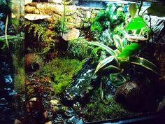Image result for vivarium for frogs