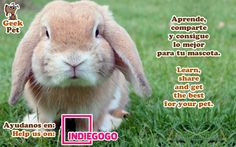 Share to help us :) Compártelo para ayudarnos :) https://www.indiegogo.com/projects/geekpet-comunidad-de-pet-lovers/#/ #mascota #pet #startup #peru #petlover