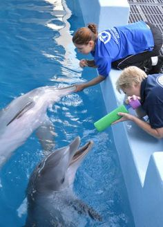 Hope you all have a ‪#‎HappyFriday‬! Winter and Hope Dolphin are having a ball on the set of Dolphin Tale 2! (Facebook via Winter the Dolphin)
