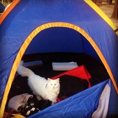 Camping with Cats Instagram. #cats #inspiration #lifegoals ;)