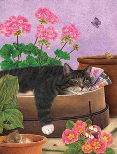 Cats Sleep Anywhere by Anne Mortimer