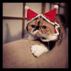 cat Santa #cutecat
