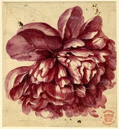 Jan van Huysum (Dutch Painter, 1682 Amsterdam - 1749 Amsterdam) | Flower study; a pink-red Peony-like bloom Watercolour, over graphite | British Museum