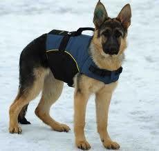 ¿Por qué un arnés y no un collar? - Educa en positivo - Educación canina