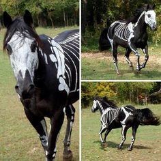 A horse's Halloween costume…
