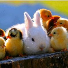 One of these things is not like the others.  Happy Easter!