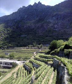 Ischia, o berço do vinho italiano - Academia do Vinho