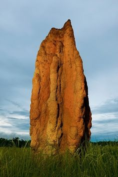 A cathedral termite mound in Northern Territory, Australia. These towers often reach more than 6m high, and are some of the most spectacular animal constructions in the world. A single structure can accommodate 2-3million termites. Small balls (a mix of earth and saliva) are brought by the workers to build up the mound. Soldier ants with gigantic heads and well-fortified pincers watch over the workers.