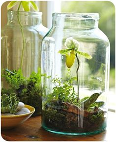 ..beautiful terrariums #heritagecollection