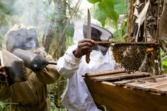 Cameroon beekeepers. Bridget and Josephine work together to extract honey from a top bar bee hive. #girlswomen