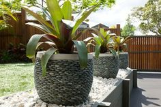 Balmoral - tropical - landscape - brisbane - Utopia Landscape Design