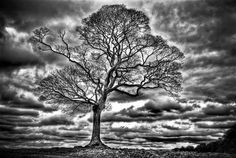 """This HDR image was one of the first produced by Barnard Photography, The tree is located in Lyme Park, Disley, near Stockport, England  It was created using five photographs of different exposure.  Currently being sold as a limited addition print  (run of 75)and is Also being used as an Album cover for a talented Rock band called """"XactaboX"""" who are based in Murrieta/Temecula, California.  The picture is entitled """"I Stand Alone"""""""