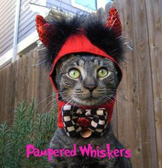Little Devil costume for dog or cat by PamperedWhiskers on Etsy, $18.99