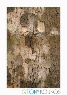 bark, tree, layered, peeling, shapes, travel, photography, art, Tony Koukos, photography, Koukos