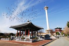 용두산 공원, Yongdusan Park, 龍頭山公園, 부산의 아름다운 공원 용두산 공원입니다.