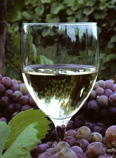 French wines and wine regions of France