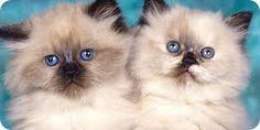 Risultati immagini per gatti