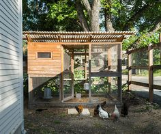 Building A Chicken Coop - Farmhouse Interior Design Ideas - Building a chicken coop does not have to be tricky nor does it have to set you back a ton of scratch. Chicken Coop Designs, Chicken Coop Decor, Chicken Coop Plans, Building A Chicken Coop, Chicken Coops, Farmhouse Interior, Farmhouse Decor, Best Egg Laying Chickens, Portable Chicken Coop