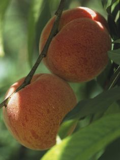 So much success container gardening fruit and veggies last year.  Doing it again this year!  Lots of good tips on this site.