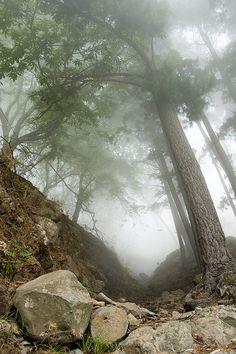 Forest at Curral das Freiras. Madeira.