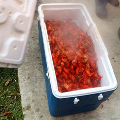 Uncle Gene's Louisiana Crawfish Boil Store cooked crawfish boil in a cooler to keep them warm Louisiana Crawfish Boil Recipe, Crawfish Boil Seasoning, Louisiana Recipes, Cajun Recipes, Fish Recipes, Seafood Recipes, Healthy Recipes, Creole Recipes, Cooking Recipes