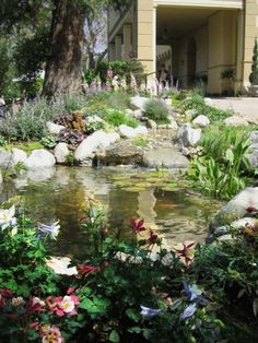 I'd like to have a pond someday.