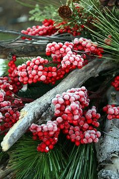 evergreens and berries