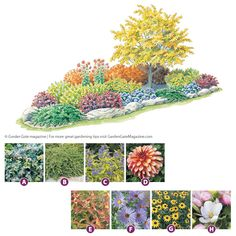 Our+garden+plan+is+colorful,+easy+care+and+has+something+to+offer+in+every+season—especially+autumn!